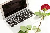Silver laptop and red rose