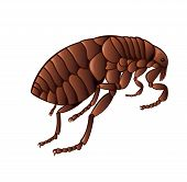 image of flea  - Vector image of simbol of brown flea - JPG