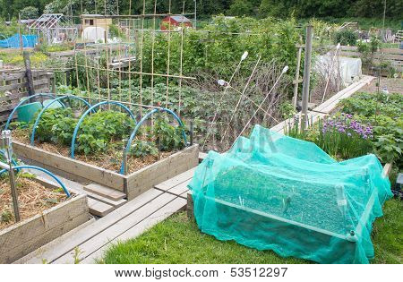 Allotment vegetable garden