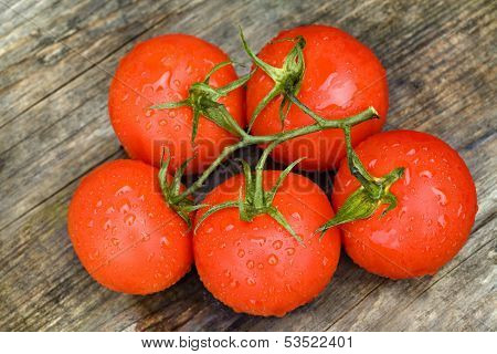 Fresh Tomatoes with Drops Of Water