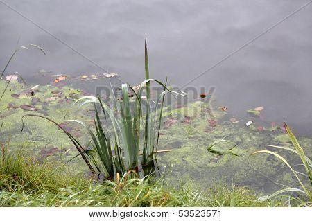 Waterside Scenery