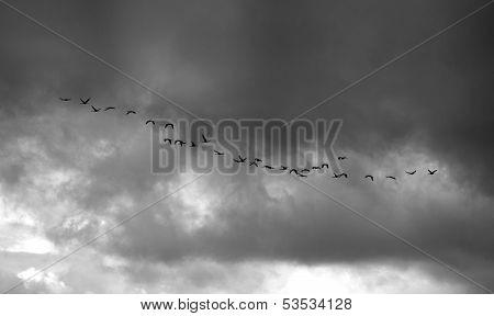 Cranes Over Cloudy Sky
