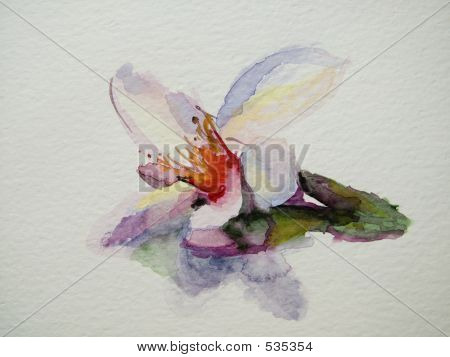 Beautiful  Flower  On White Background-my Original Hand Drawn Image