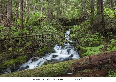 Rushing Cascade In Forest