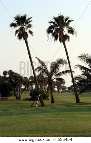 Golf Course Palms
