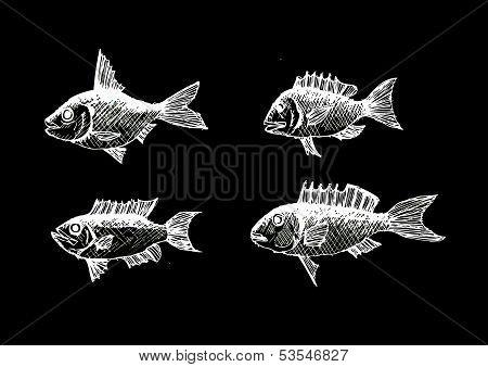 hand drawn fish Vector illustration