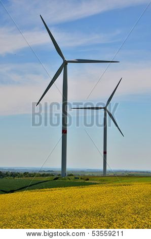 Windturbines on a colza field