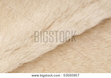 Sheep fur texture close-up