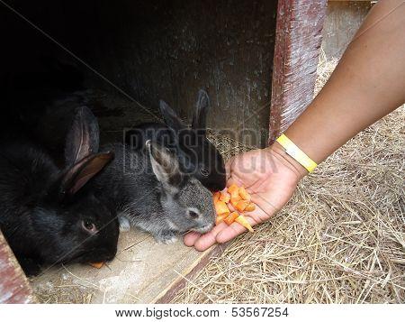 Alimentando conejitos en la granja del Tio Juan,ubicada en Reynosa,Tamaulipas,M�xico.