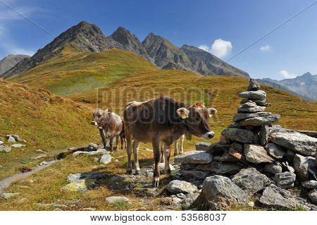 Cow At The Feet Of The Mountains