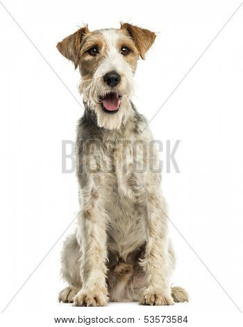 Close-up of a Fox terrier sitting, facing, panting, isolated on white