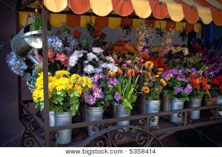 多彩多姿鲜花予出售