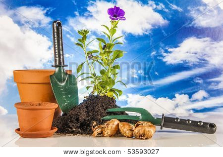 Beautiful theme of garden, vivid colors, bright background