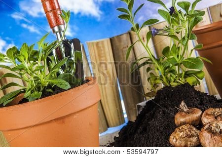 Concept of gardening, nature theme