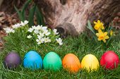 stock photo of primrose  - Easter eggs in a row hidden in the garden - JPG