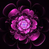 Beautiful Purple Flower On Black Background. Computer Generated