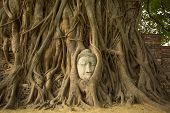 picture of expressionism  - The Head of Buddha in Wat Mahathat - JPG