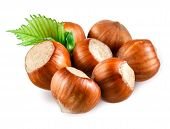 stock photo of hazelnut  - Hazelnut - JPG