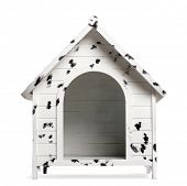 foto of spotted dog  - Dog kennel - JPG