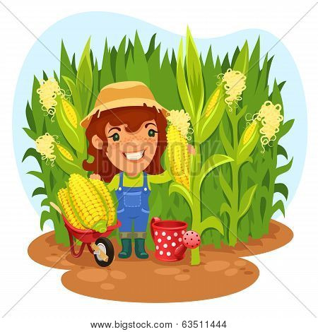 Harvesting Female Farmer In A Cornfield