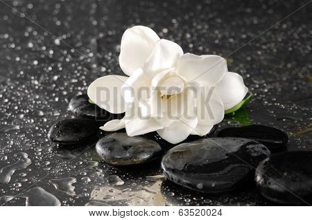 Macro of gardenia with therapy stones