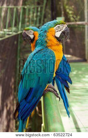 Two big parrots