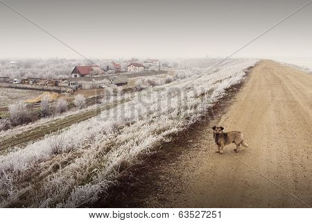 Homeless Dog On Road In Winter