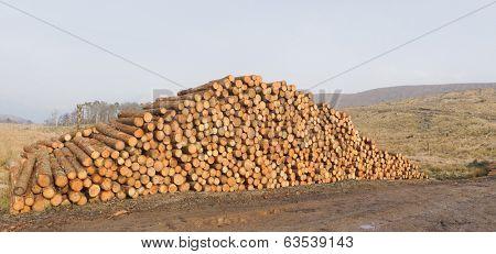 Log pile from deforestation
