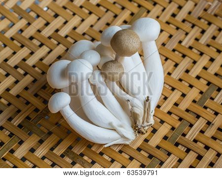 white and brown beech mushroom