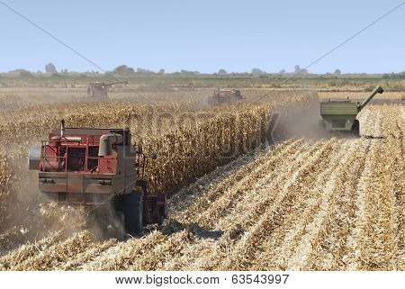 Combine Harvests Corn