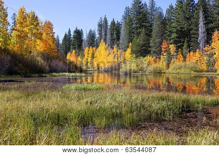 Lake Reflection Of  Aspens