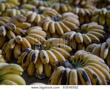 poster of The Group Of Kind Of Banana Or Pisang Mas