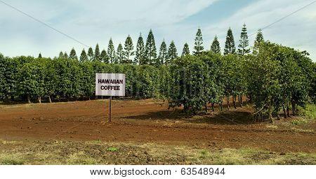 Hawaiian Coffee Farm.