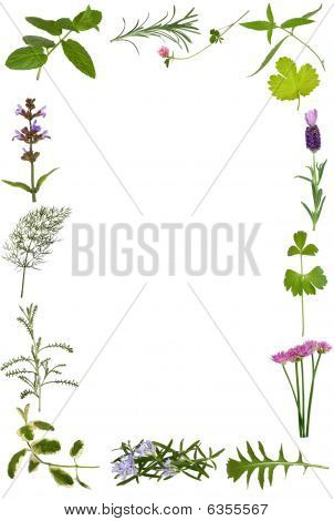 Herb Flower And Leaf Border