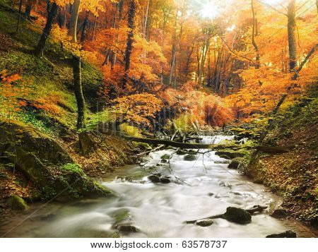 Autumn creek woods with yellow trees foliage and rocks in forest mountain.