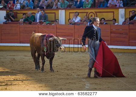 Torero And Bull In Bullfight