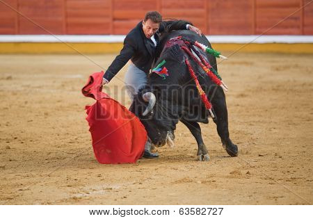 Hug, bull