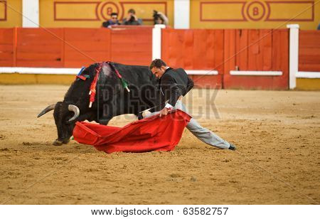 Bullfighter, his, knees