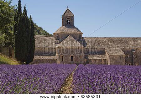 Abbey Senanque (provence, France)