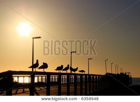 Seagulls In Silhouette On A Wooden Jetty In Front Of The Evening Sun.  Larg's Bay, Adelaide, Austral