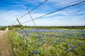 pic of bluebonnets  - Bluebonnet field and fence along a country road in Texas spring - JPG