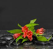Flowering of the red lily with zen stones