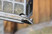 image of chickadee  - Black - JPG