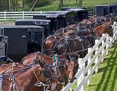 stock photo of workhorses  - Horse drawn carriages parked at an Amish auction in Berlin - JPG