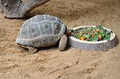 pic of tortoise  - A feeding tortoise in zoo Gran Canaria - JPG