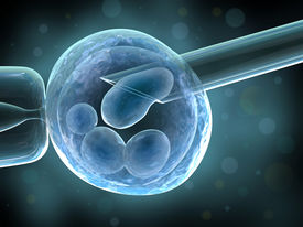 pic of zygote  - Genetic  - JPG