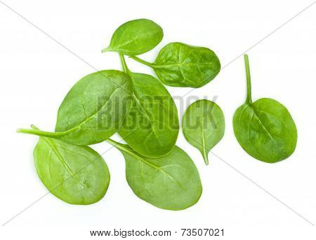 Baby Spinach Leaves On White Background