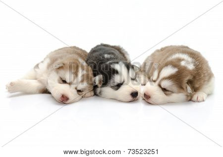 Cute Puppies Siberian Husky Sleeping On White Background