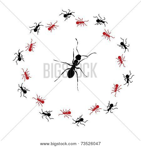 Circle Of Ants Surrounding One Large Ant