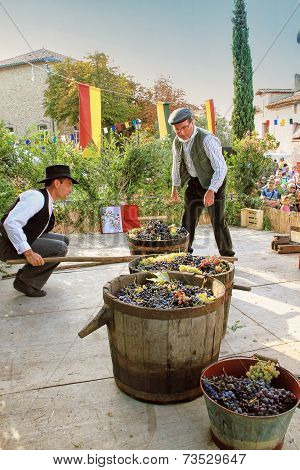 Harvesting Grapes: Festival Of The Grape Harvest In Chusclan Village, South Of France